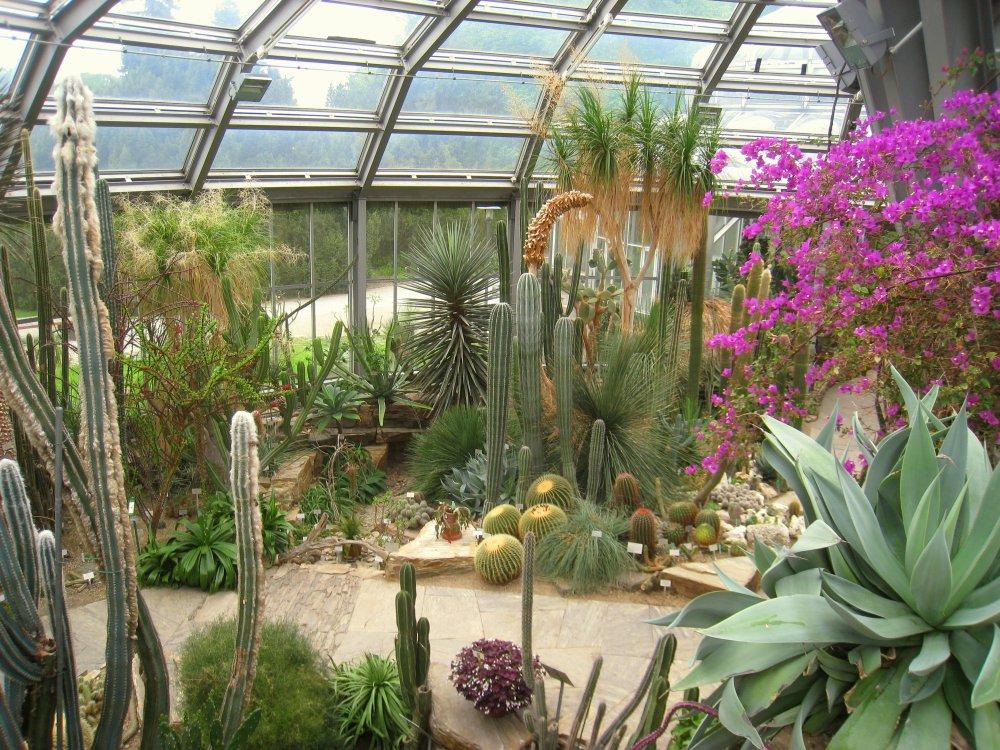 botanischer-garten-berlin-pflanzen